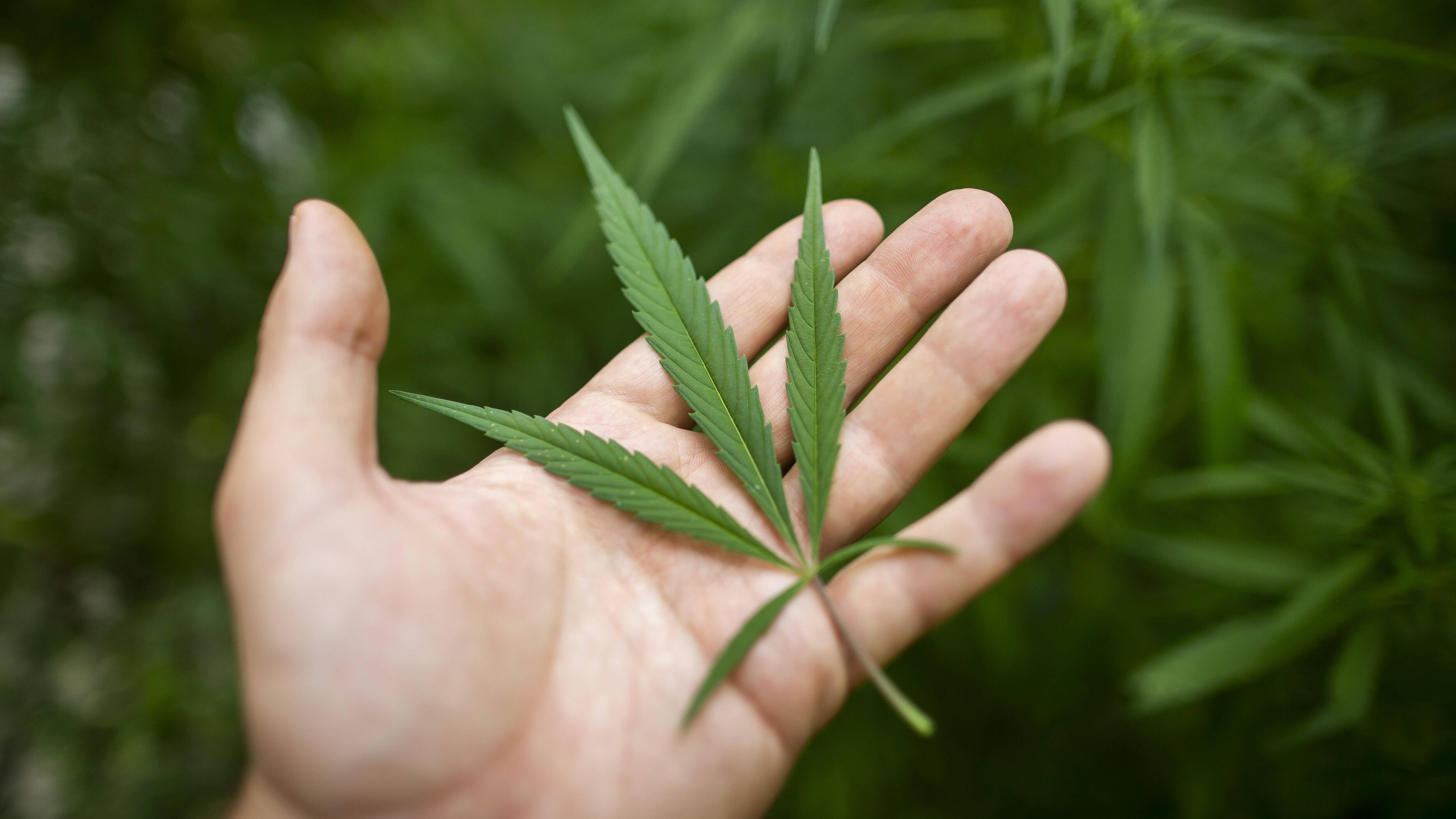 Was bedeutet 420? Wir klären auf