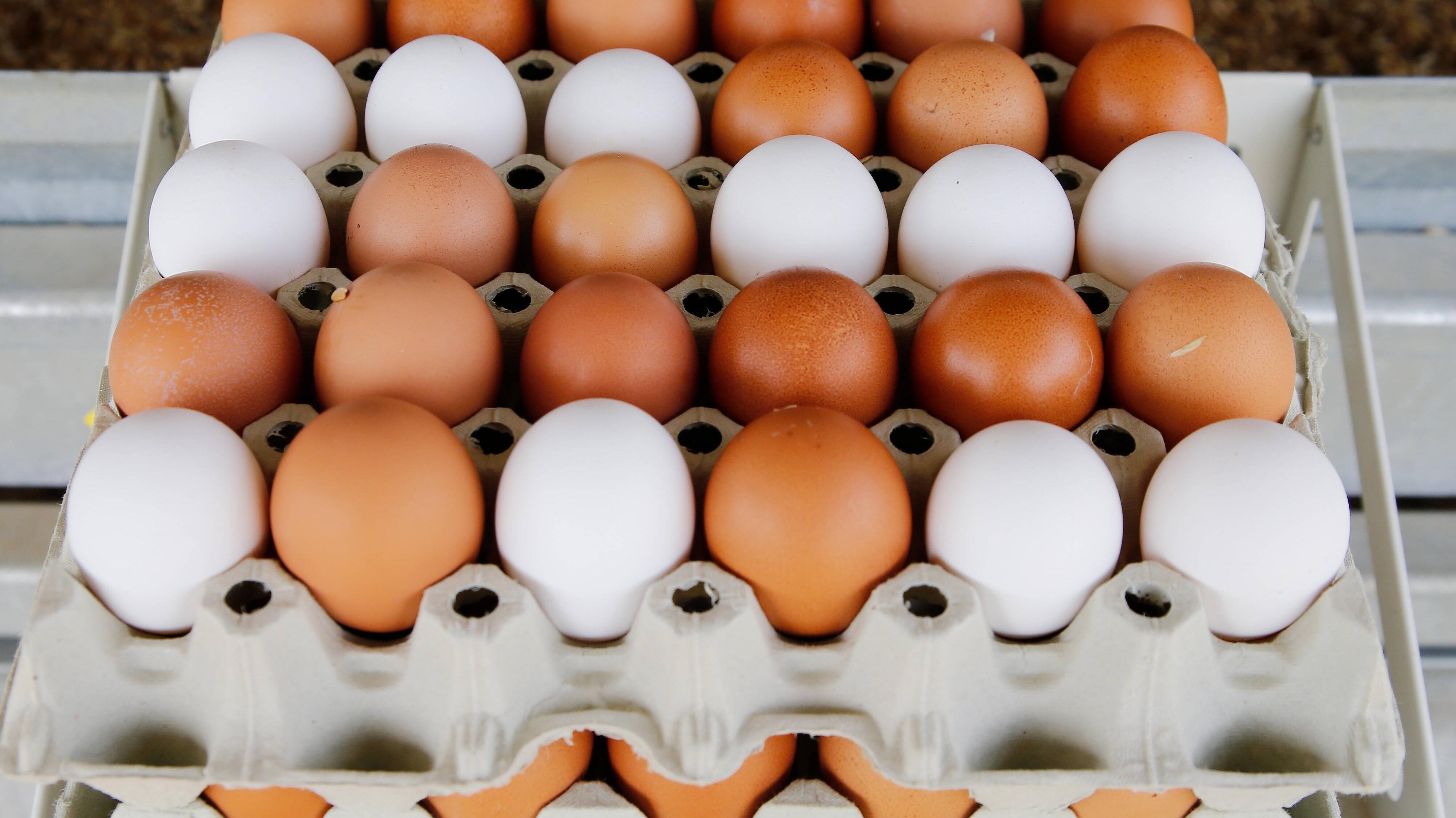 Eierkocher benutzen: Tipps und Hinweise zur Bedienung