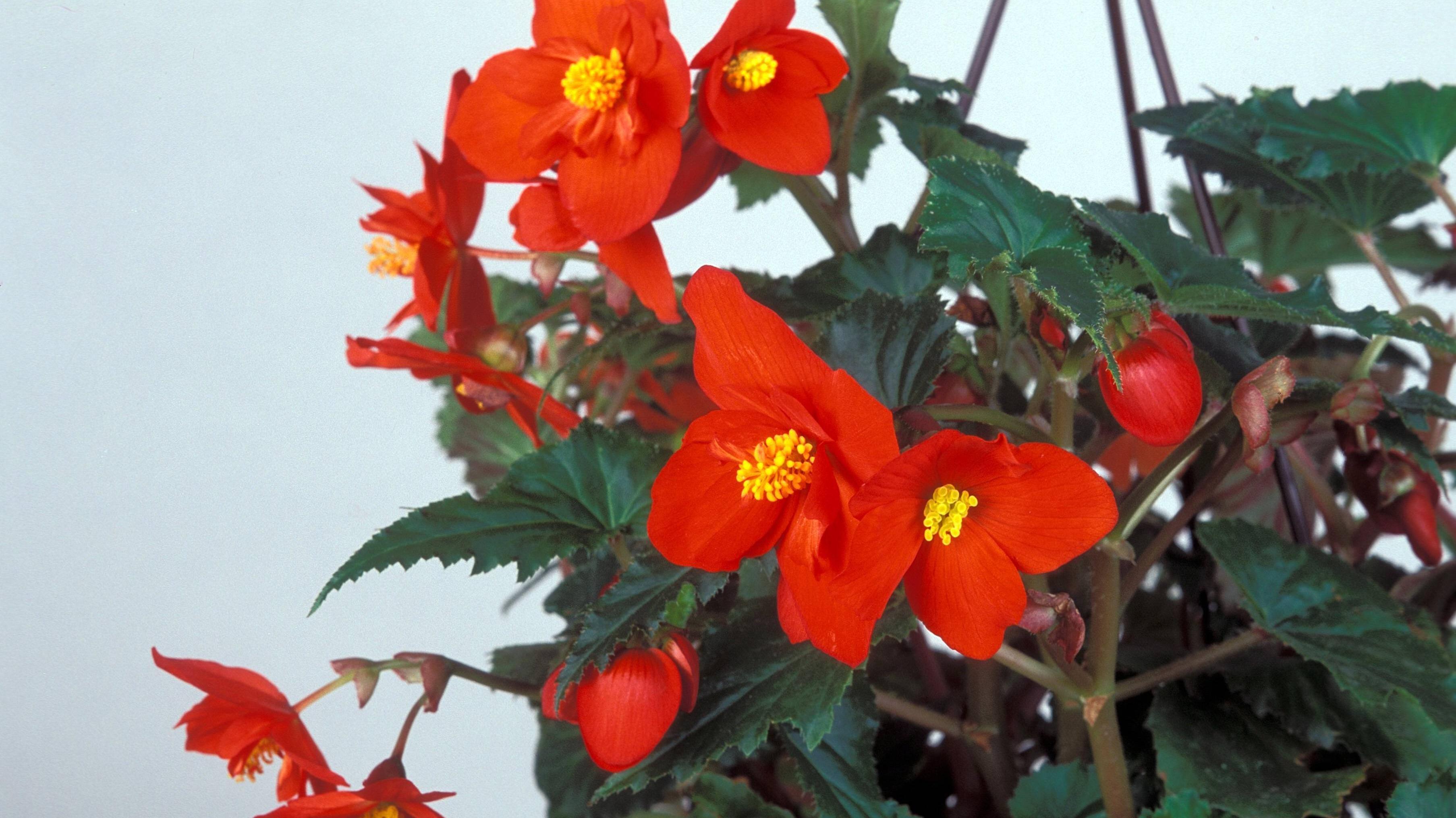 Makramee Blumenampel: Eine einfache Anleitung