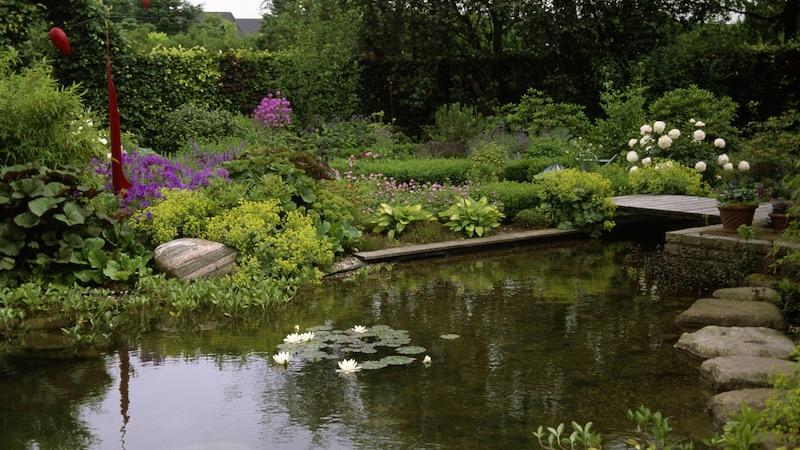 Mit Blumen lässt sich der Teichrand abwechslungsreich gestalten.
