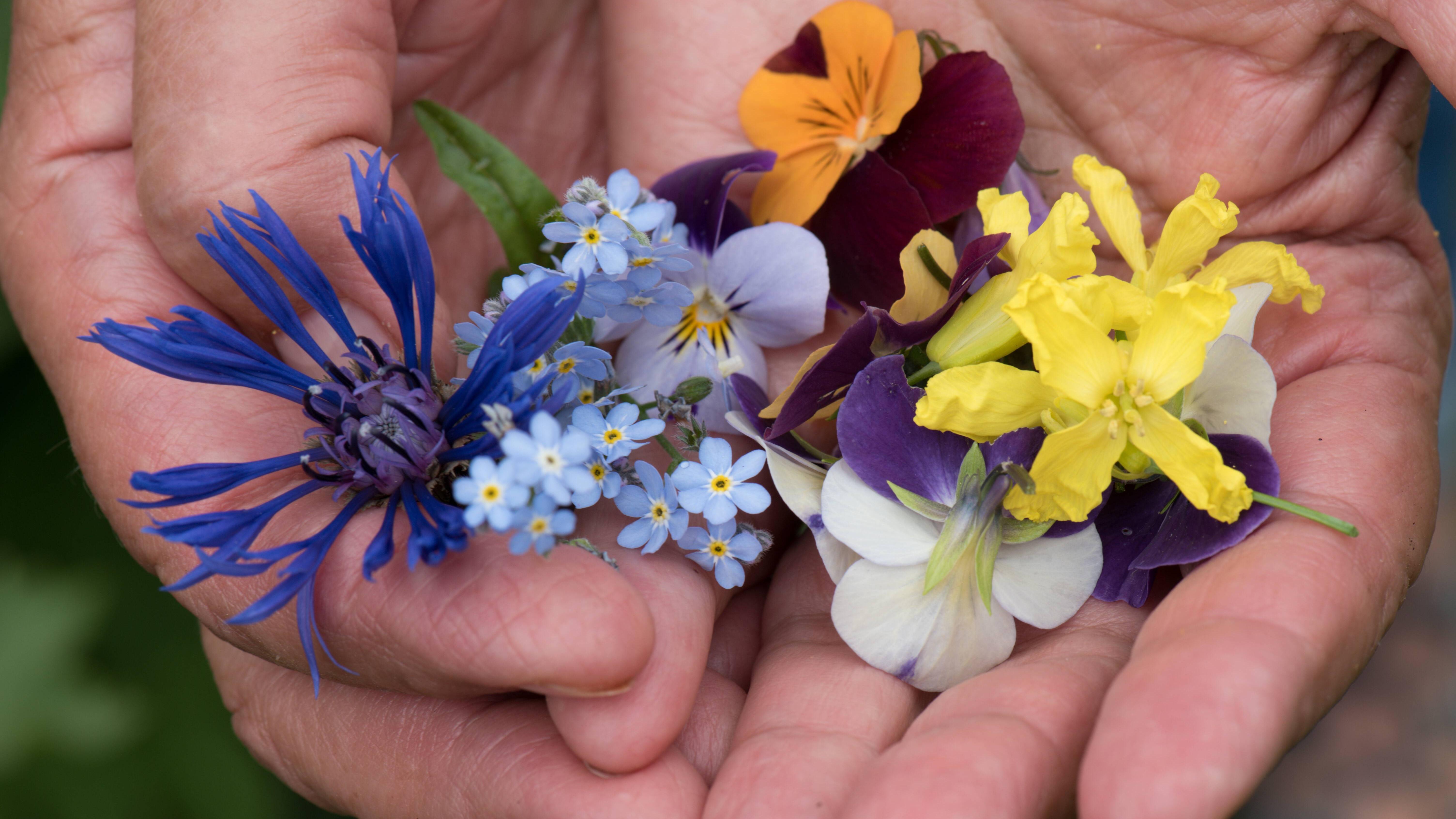 Es gibt viele essbare Blüten, mit denen Speisen verziert und verfeinert werden können.