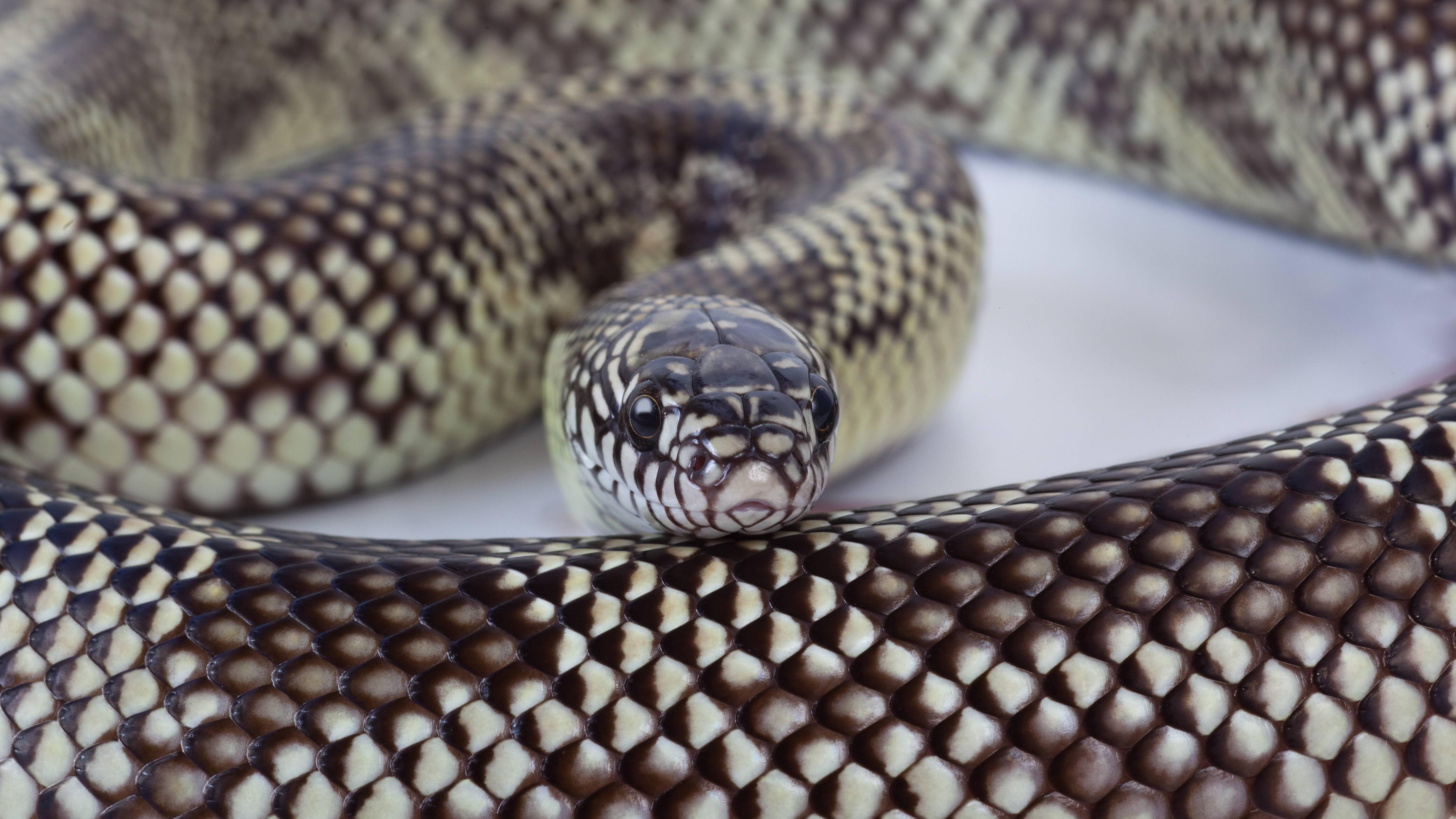 Schlangen-Tattoo: Bedeutung und was hinter dem Trend steckt