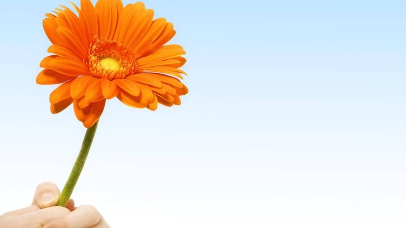 Gerbera: Diese Bedeutung steckt hinter der Blume