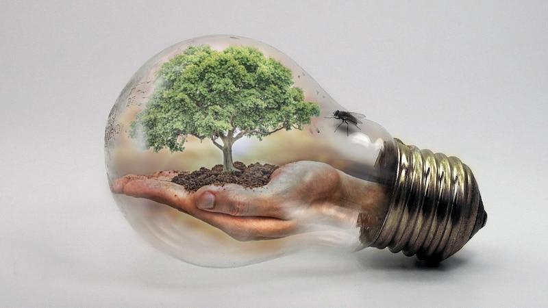 Glühbirne bepflanzen - so geht's
