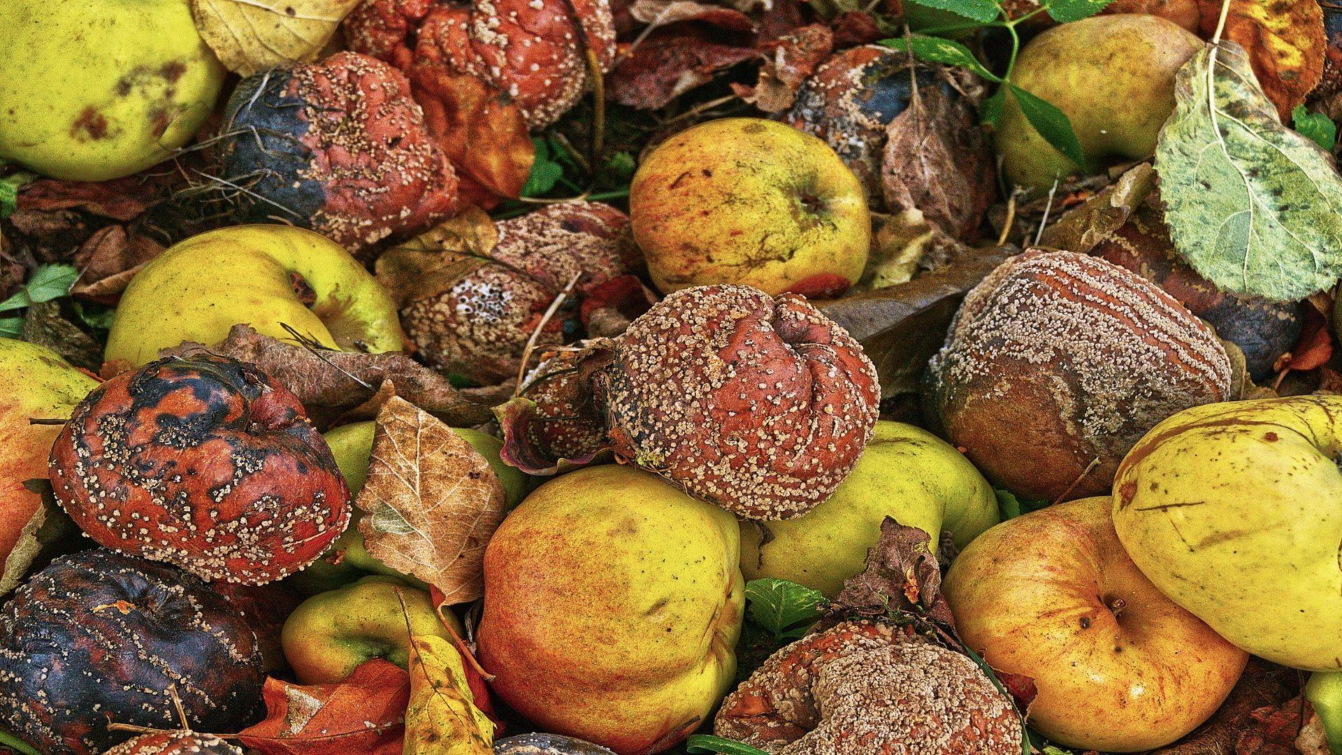 Monilia: So bekämpfen Sie die Fruchtfäule