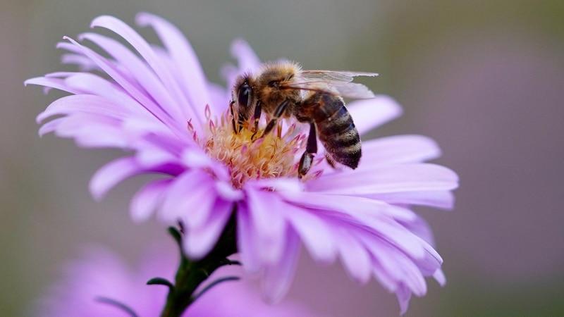 Bienenweiden bieten einen schönen Anblick und haben einen ökologischen Nutzen.