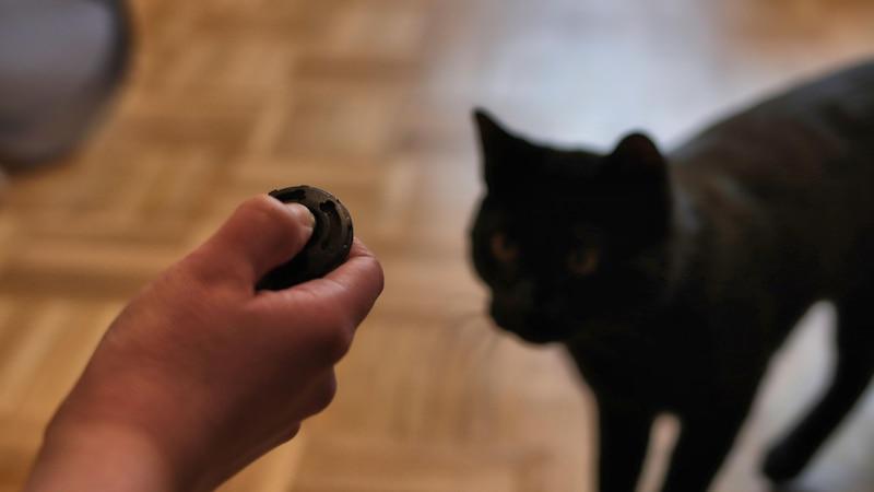 Das Clickertraining ist auch etwas für Katzen-Freunde.