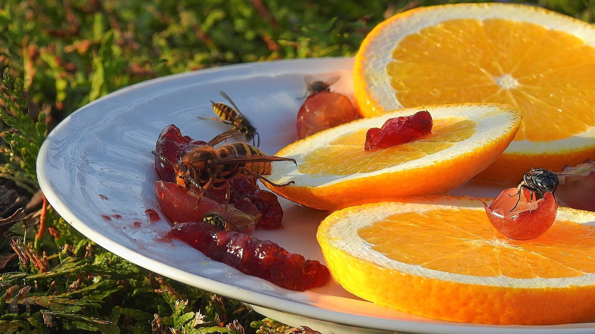 Durch Insektenbisse entstandene Wunden sind anfällig für Monilia-Fruchtfäule.