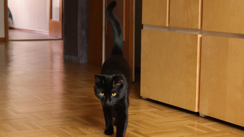 Der Katzenschwanz: Seine Bewegungen haben diverse Bedeutungen.