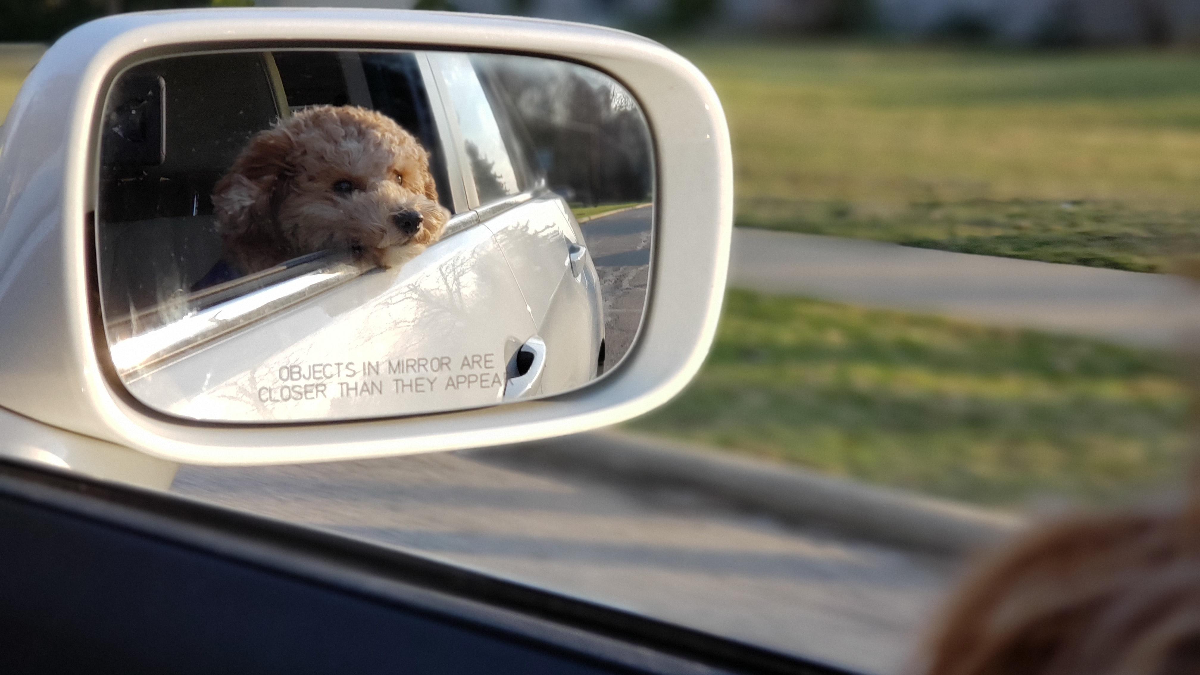 Hundegeruch aus dem Auto entfernen - die besten Tipps