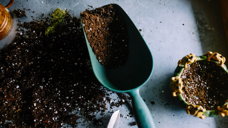Mehr Kalorien verbrennen: Gartenarbeit kann helfen
