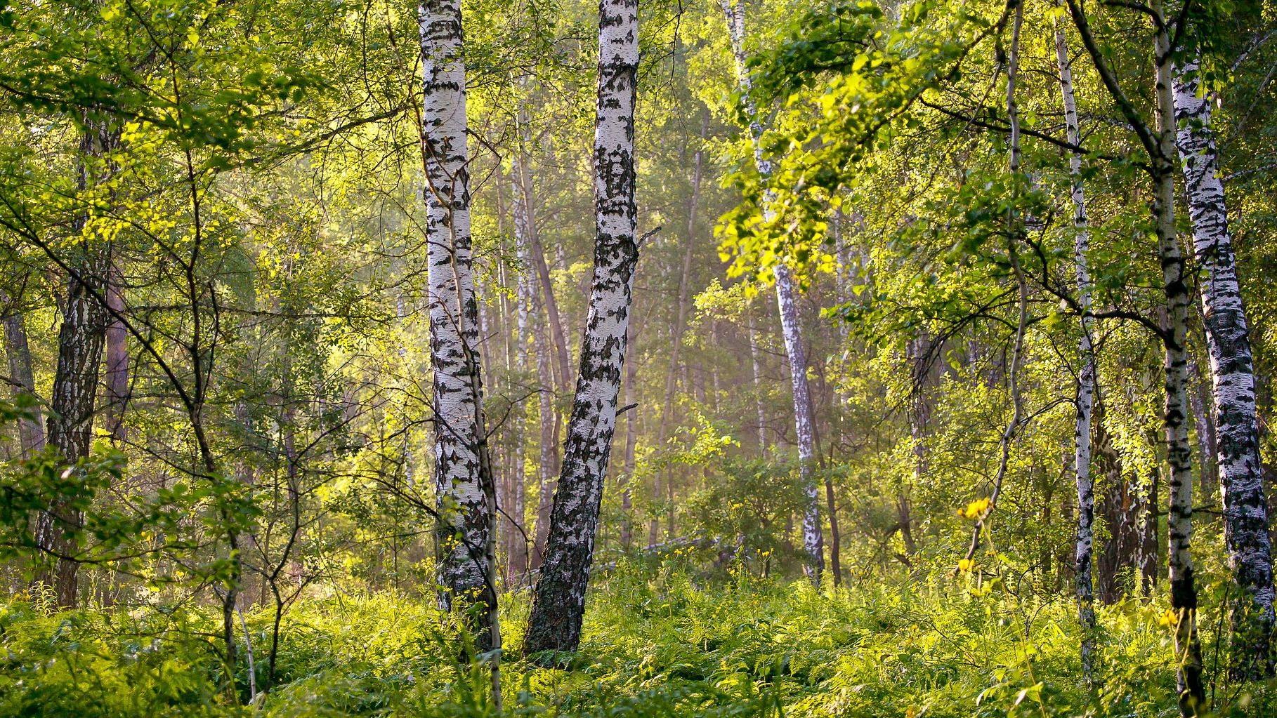 Birkenwanzen können Sie mit recht einfachen Mitteln aus Wohnung oder Haus vertreiben.
