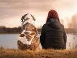 Ein Hund ist ein Begleiter fürs Leben, ein Kauf sollte wohl überlegt sein