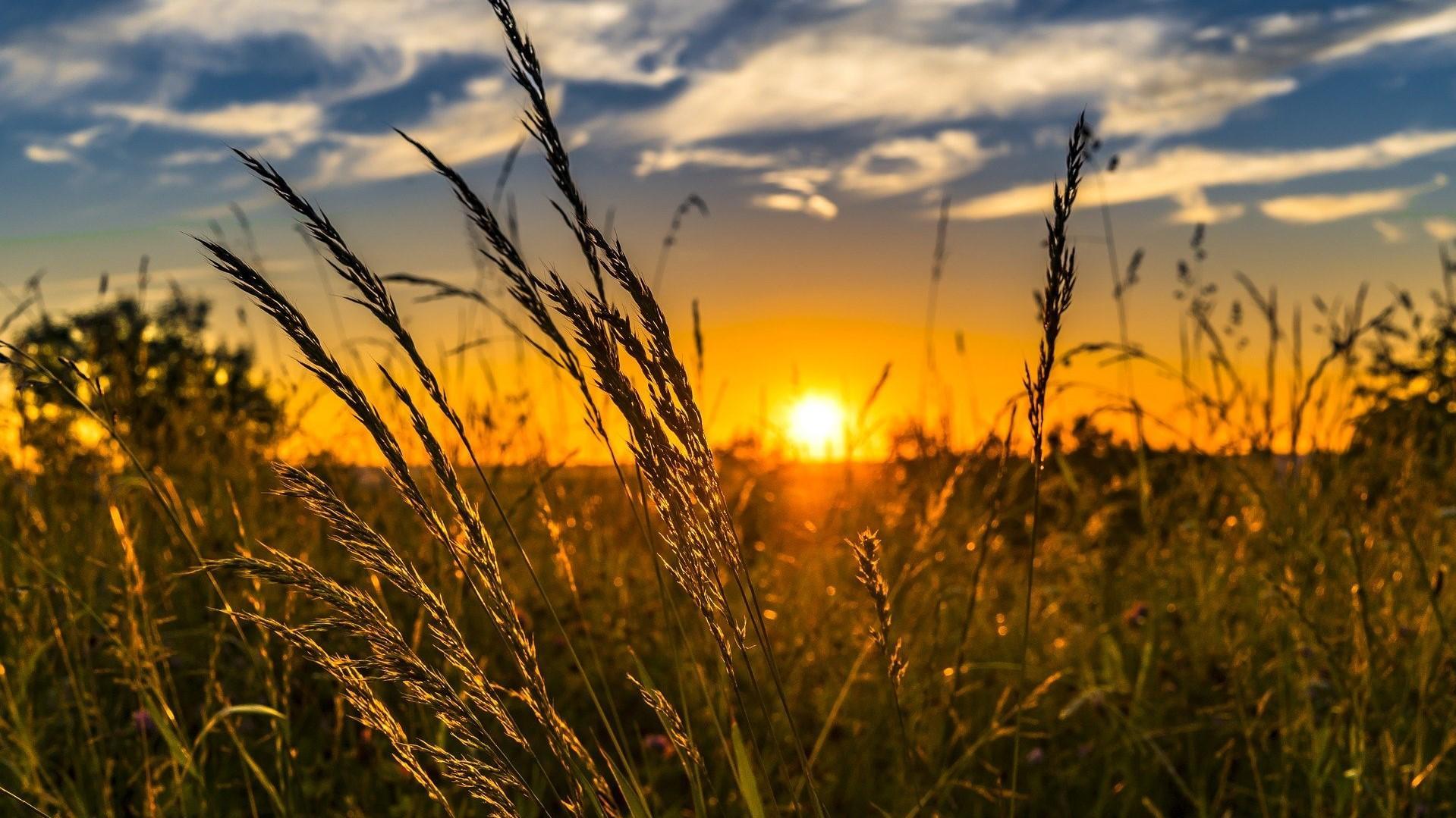 Eine Pollenallergie schränkt die Lebensqualität oft deutlich ein