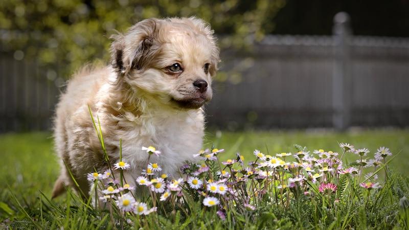 Hund anschaffen: Welche Fragen Sie vorab bedenken müssen