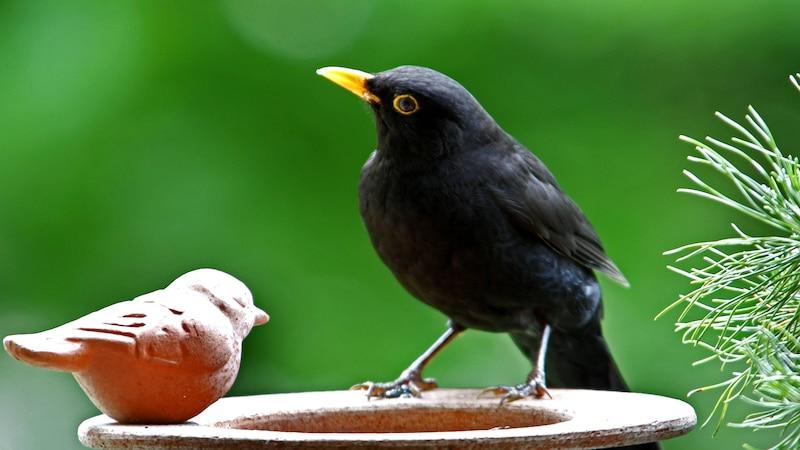 Vogeltränke katzensicher machen: Praktische Tipps und Tricks