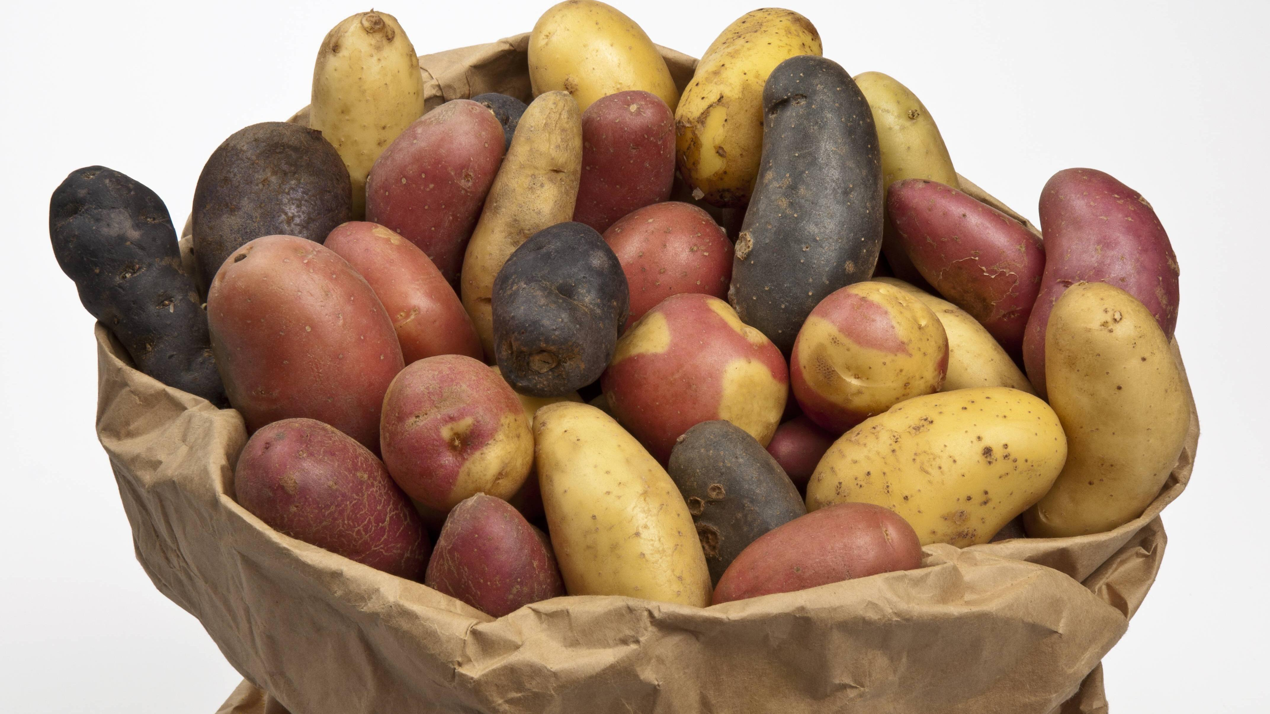 Kartoffeln richtig lagern - so klappt's