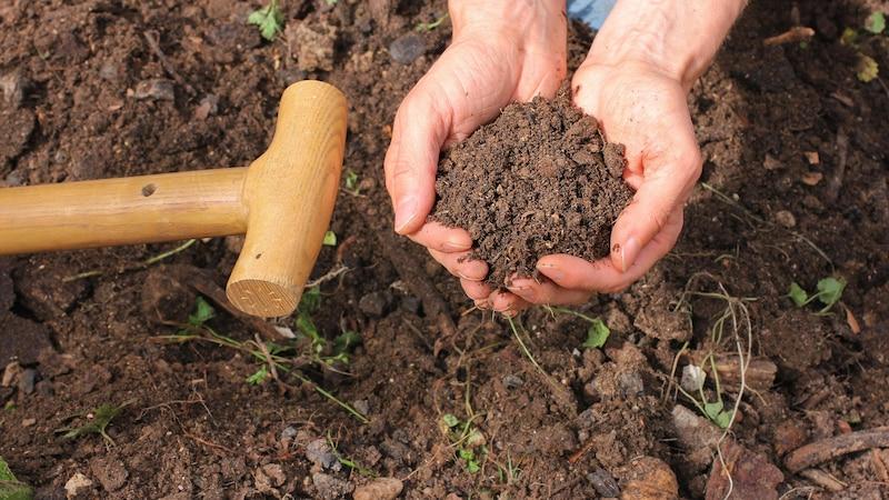 Effektive Mikroorganismen für den Garten: Tipps für Ihre Pflanzen