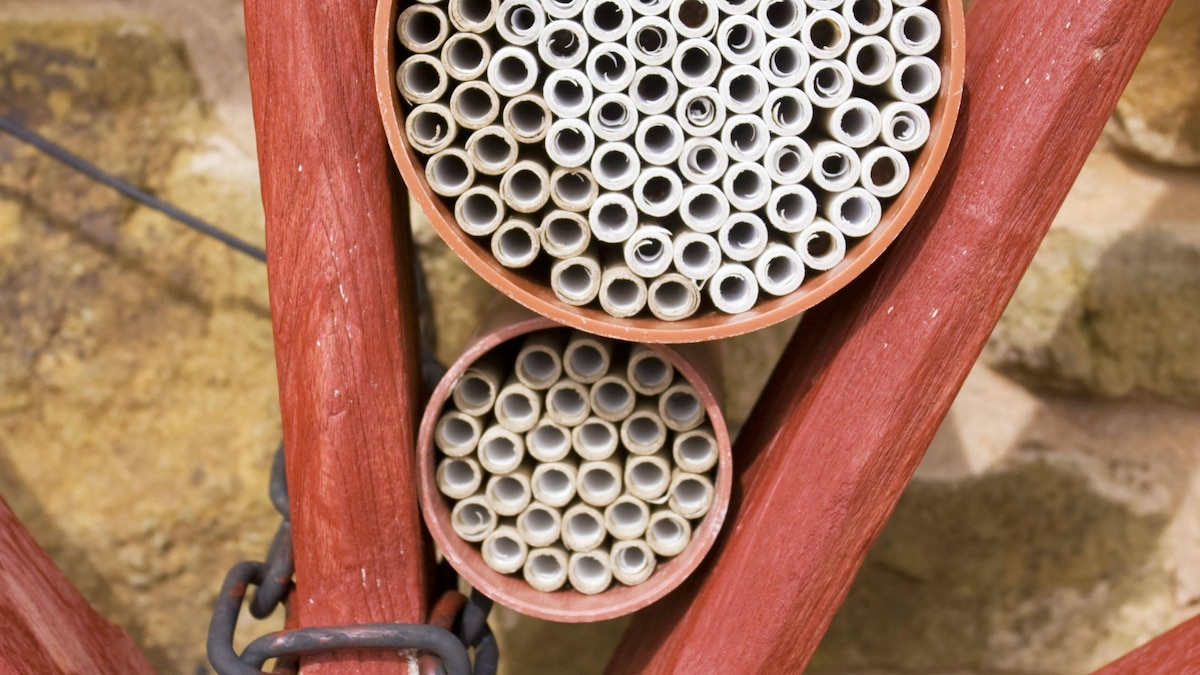 Sie müssen sich ein Insektenhaus nicht unbedingt kaufen, sondern können es auch selbst bauen.