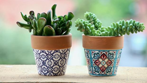 Ein Kaktus ist als Zimmerpflanze sehr pflegeleicht.