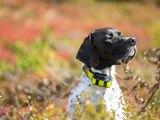 GPS-Tracker können auch am Hundehalsband befestigt werden.