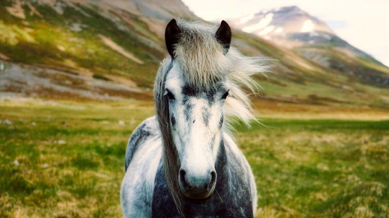 Beliebte Pferderassen: Das sind die Top 10