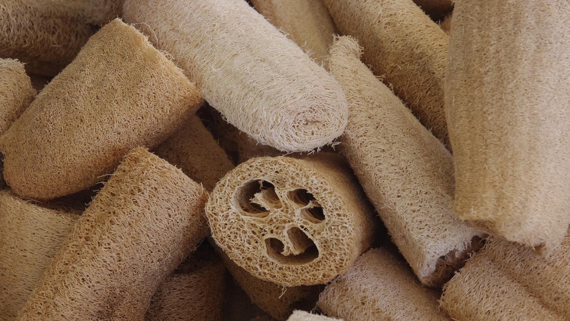Luffa-Gurke selber anbauen: Mit etwas Glück und Geschick können Sie nach einiger Zeit die nachhaltigen Luffa-Schwämme ernten.