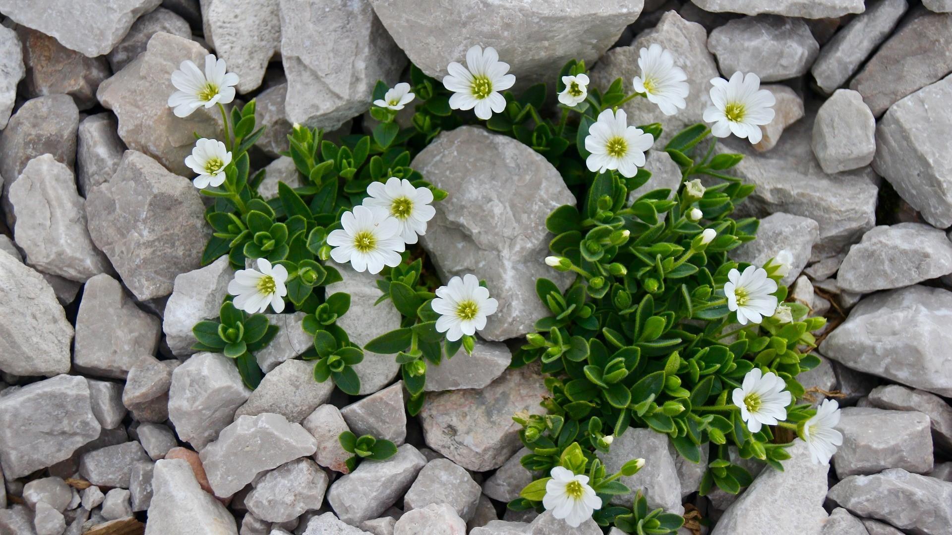 Kiesgarten bepflanzen: Tipps für die Balance zwischen Kies und Grün