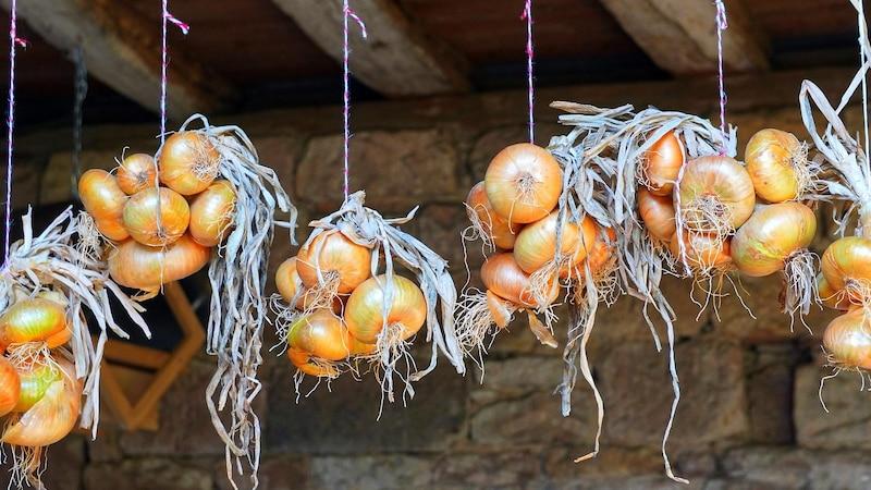 Zwiebeln lagern: Tipps und Tricks zur richtigen Aufbewahrung