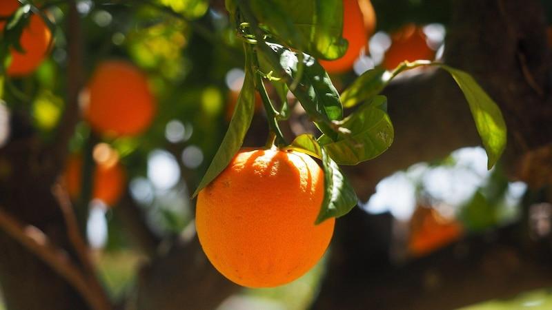 Orangenöl: Wirkung und Einsatz als Pflegeprodukt und im Haushalt
