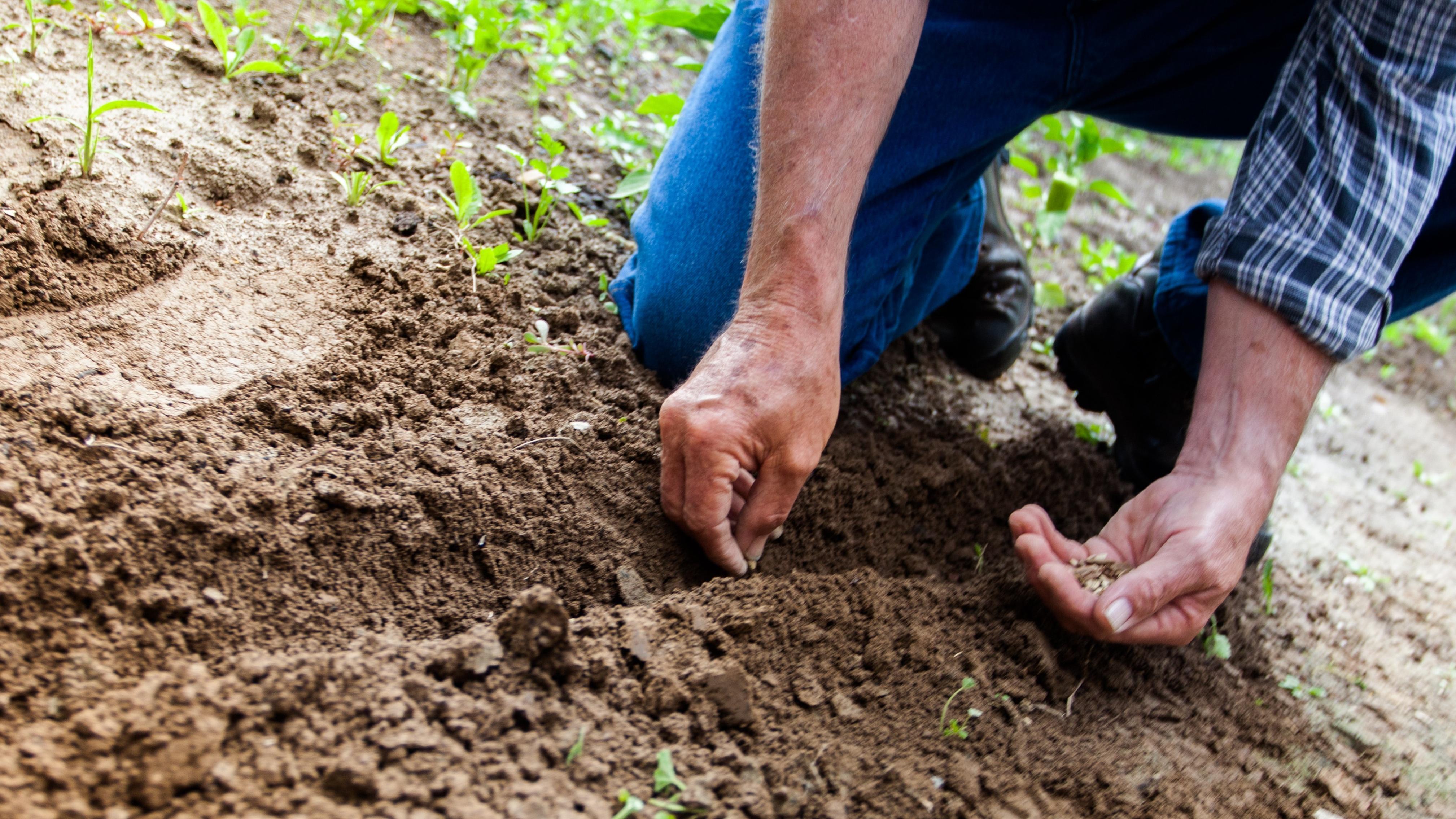 Das immerblühende Beet gelingt mit der richtigen Bepflanzung.