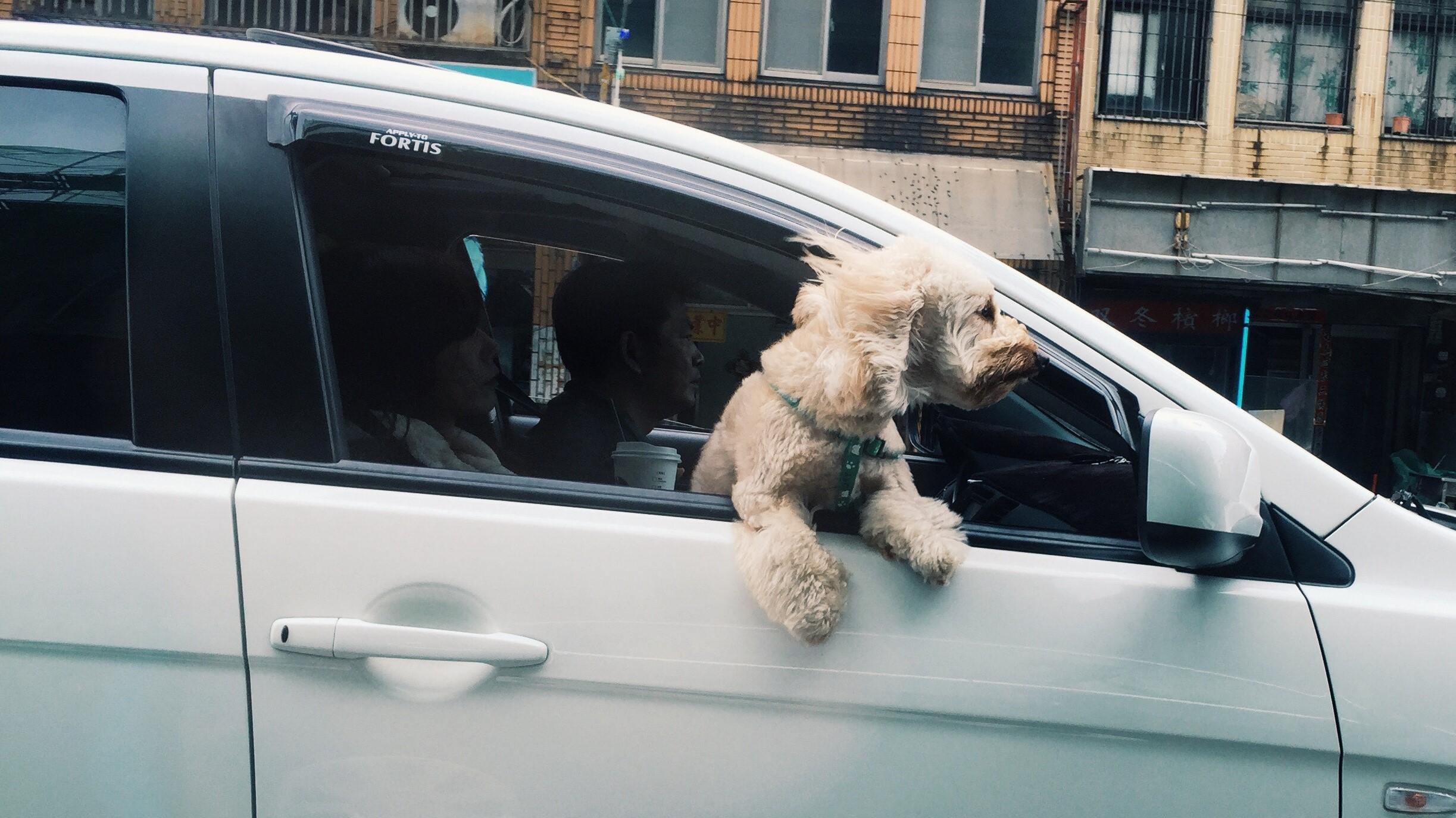 Hund hat Stress beim Autofahren: Das können Sie tun
