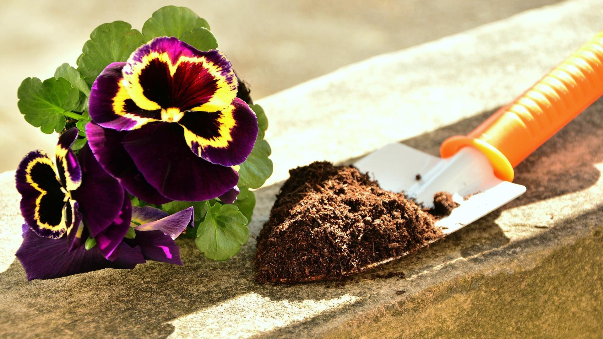 Stellen Sie einen Milbenbefall in der Blumenerde fest, tauschen Sie die Erde direkt aus.