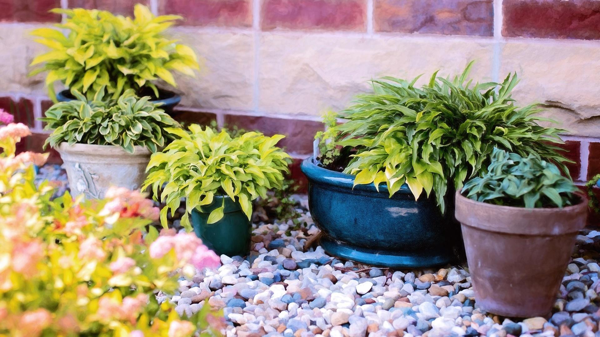 Milben in Blumenerde: So gehen Sie dagegen vor