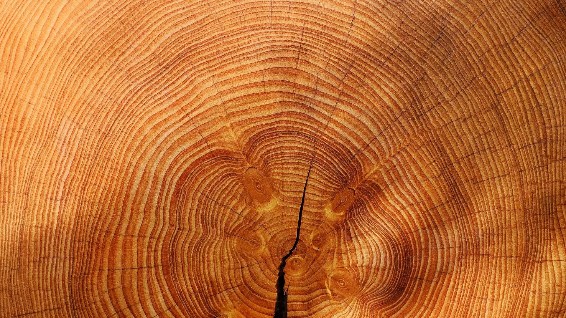 Einen Holzwurmbefall können Sie mit verschiedenen Mitteln bekämpfen.