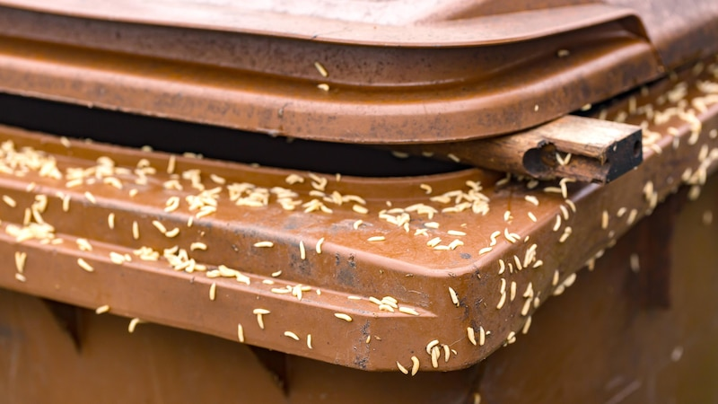 Maden finden in der Mülltonne oftmals ein passendes Zuhause.