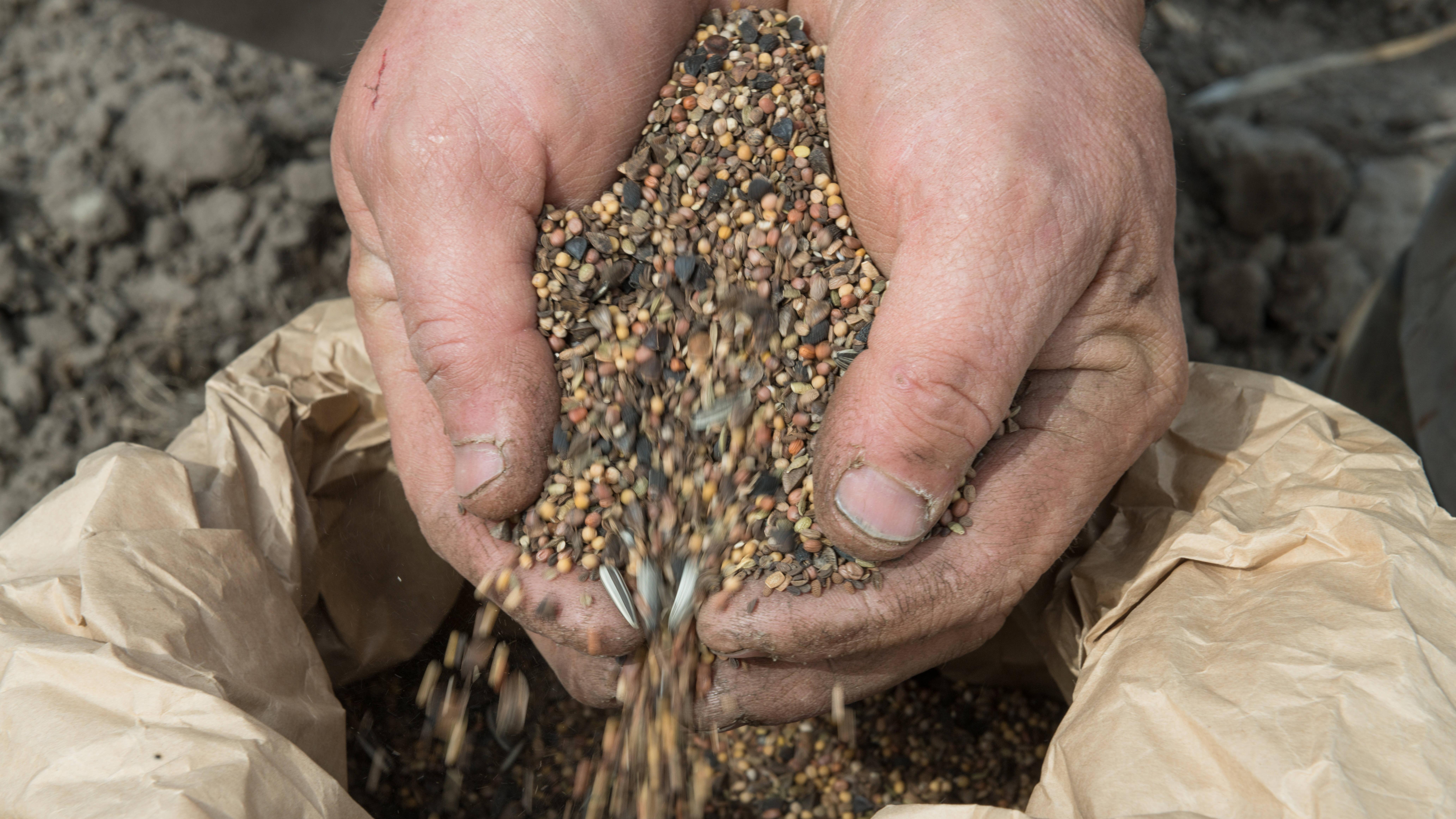 Saatgut muss richtig aufbewahrt werden, damit es später zuverlässig keimt