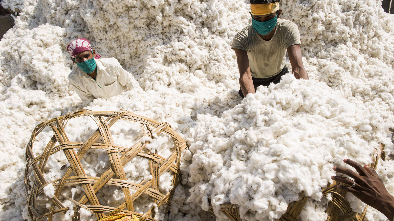 Was ist Fairtrade-Baumwolle? So funktioniert der faire Handel