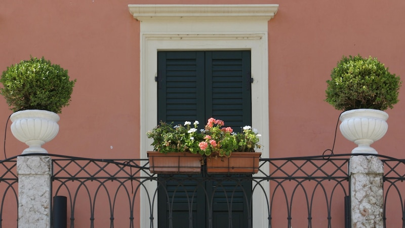 Rankende Balkonpflanzen: Ideen für einen grünen Balkon