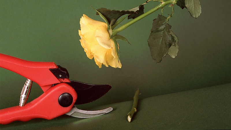 Gartenschere richtig schärfen: Darauf sollten Sie achten