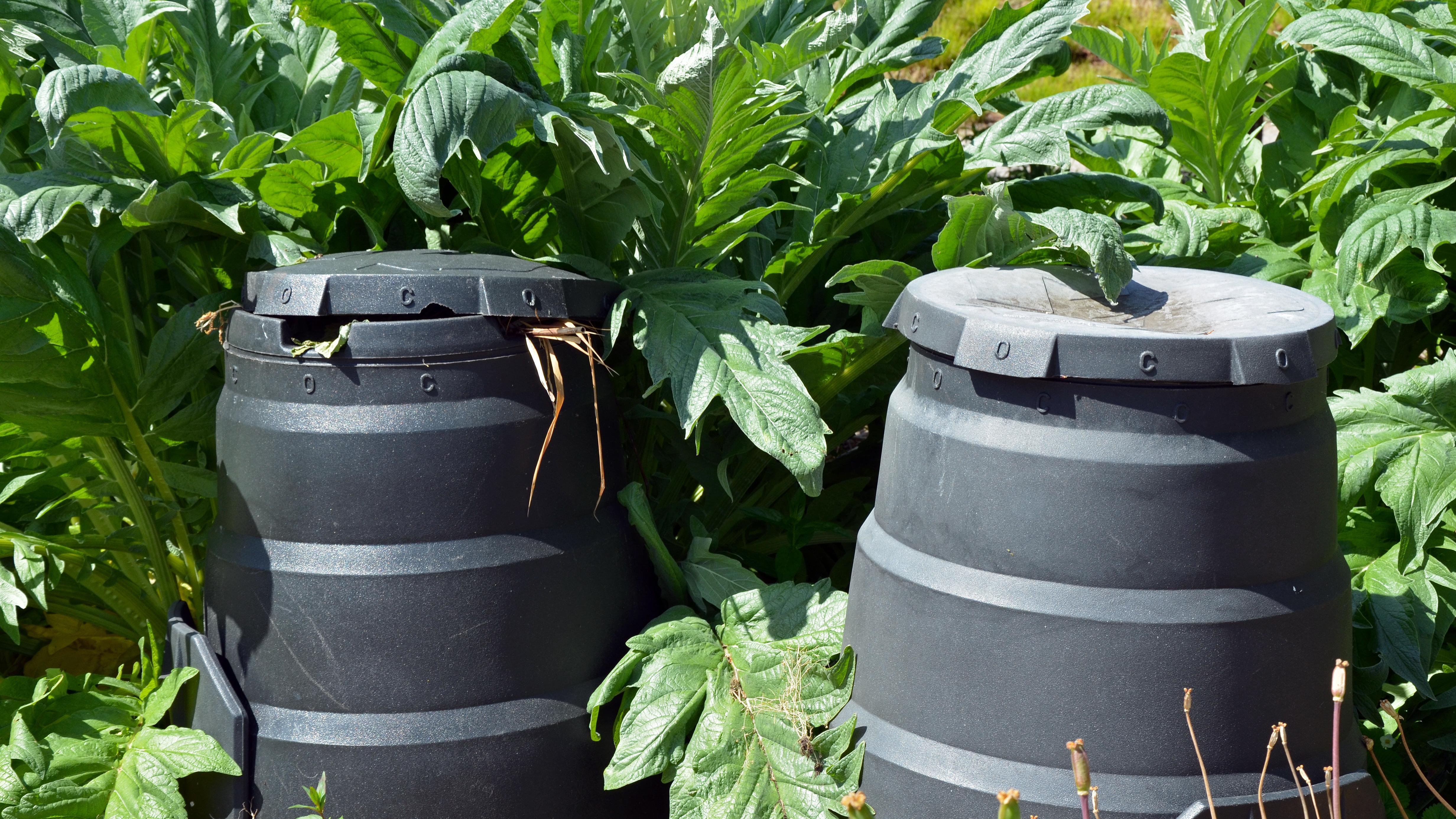Nachhaltig gärtnern gelingt zum Beispiel, indem Sie Regenwasser auffangen.