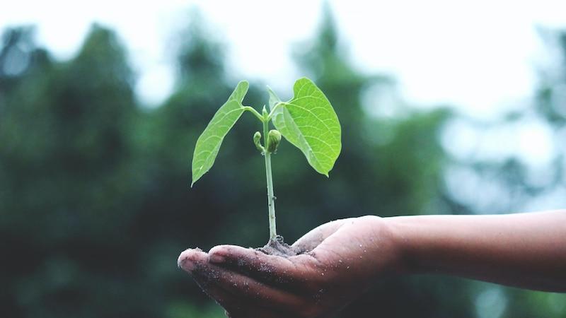 Nachhaltig wohnen: Tipps und Ideen für nachhaltiges Wohnen