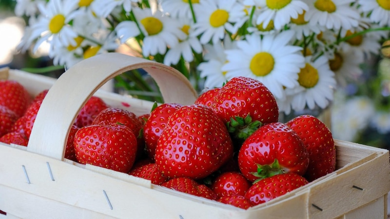 Wir zeigen Ihnen, wie Sie Erdbeeren richtig pflücken.