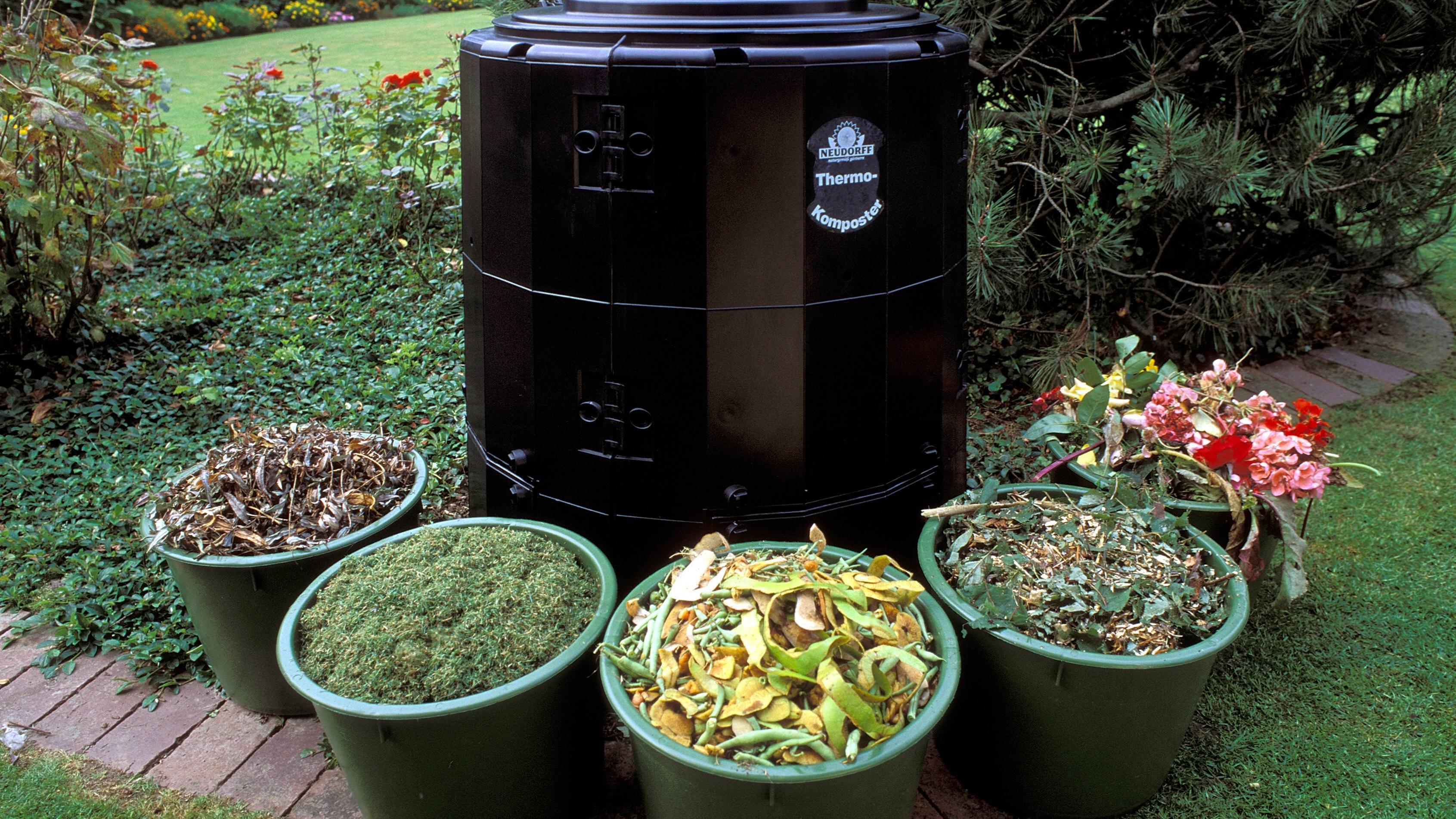 Zitrusfrüchte im Kompost - das sollten Sie wissen