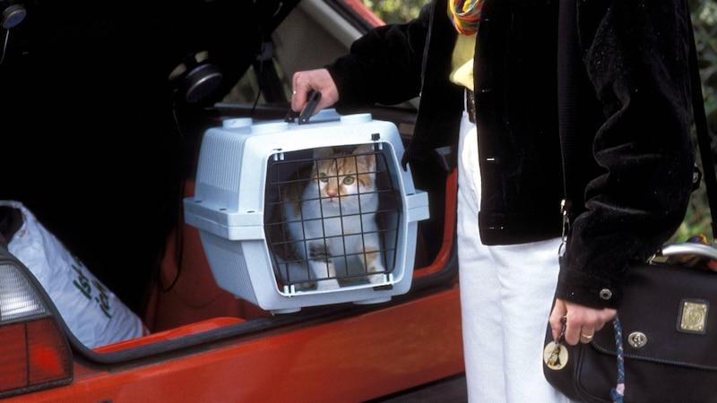 Katze im Zug mitnehmen: Tipps und Hinweise zur Bahnfahrt