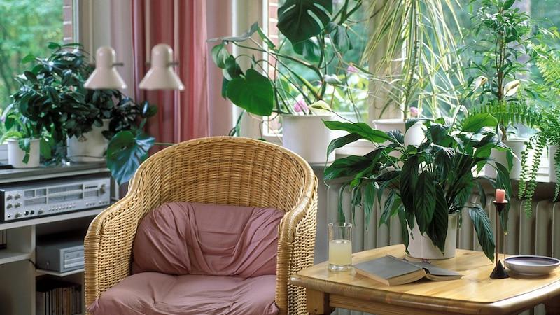 Die Auswahl an luftreinigenden Zimmerpflanzen ist groß.