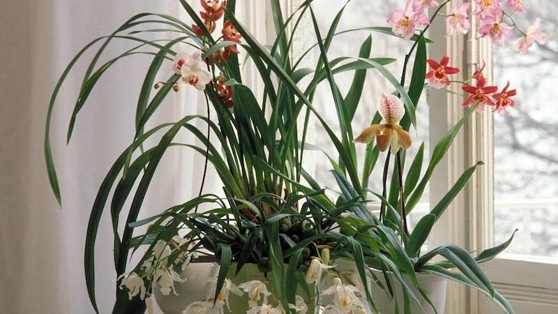 Orchideen im Schlafzimmer - das müssen Sie beachten