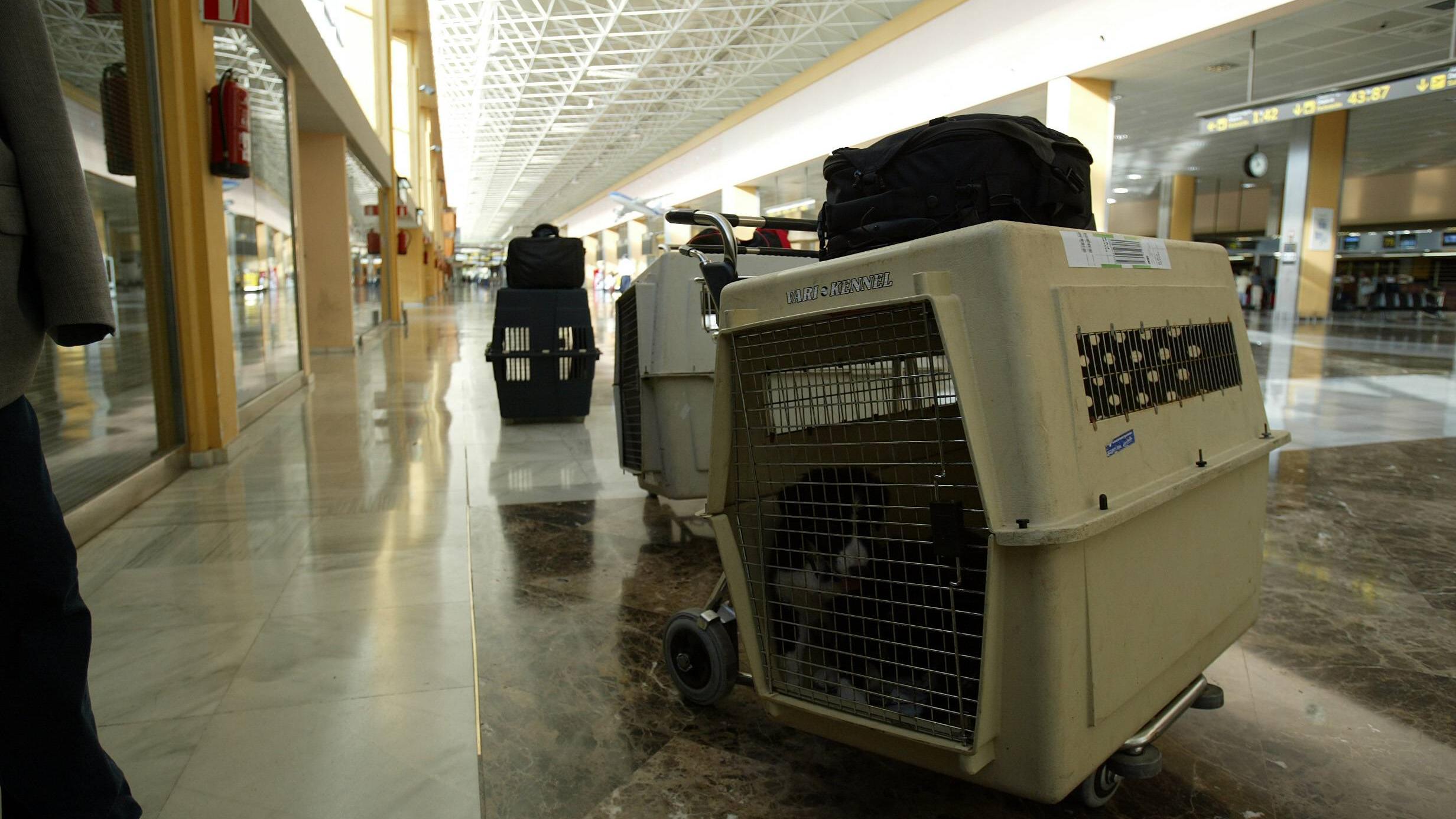 IATA-konforme Hundebox für Flugreisen
