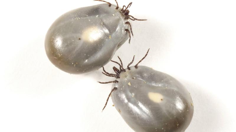 Zeckennest erkennen: So finden und beseitigen Sie Eier und Nester