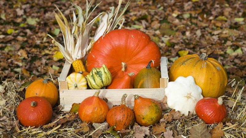 Mit Zierkürbissen dekorieren: 5 Ideen für den Herbst